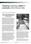 Trapping migrating catfish in channels at the Khone Falls
